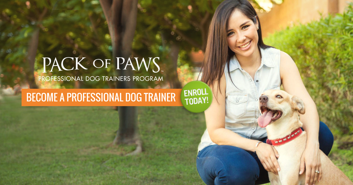 Become a Professional Dog Trainer | MA, CT | Pack of Paws Dog Training