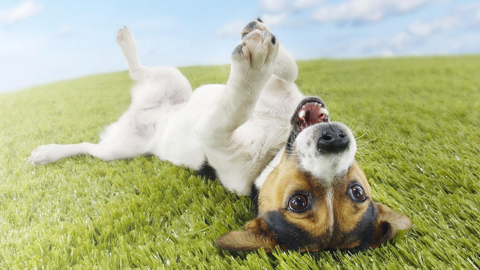 Dog Wallpapers Dog Desktop Images Hd Dog Images Hairy Dogs Pets rh