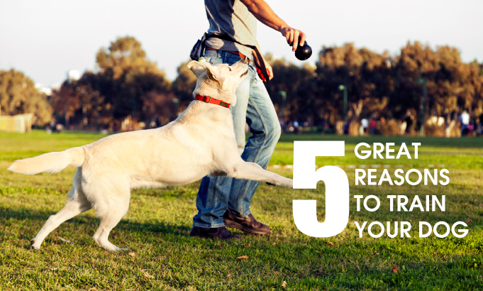 5 GREAT REASONS TO TRAIN YOUR DOG