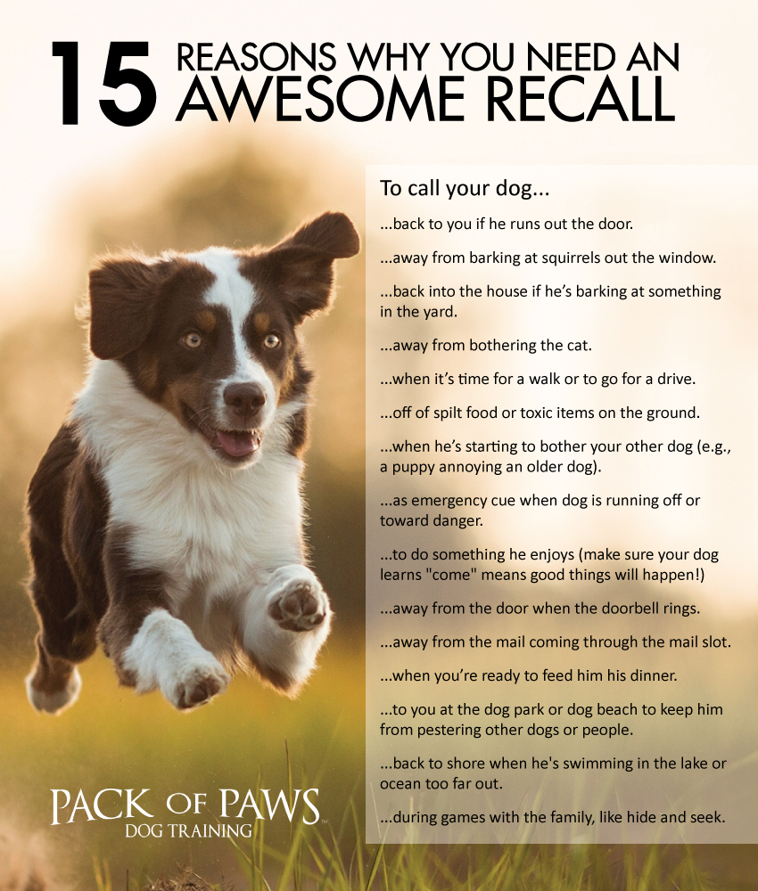 15 Reasons Why You Need An Awesome Recall Pack Of Paws