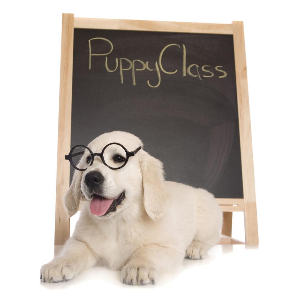 Puppy Classes