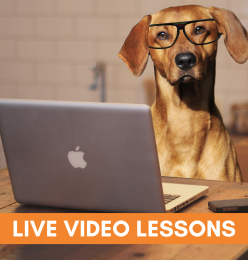 Online/Remote Learning